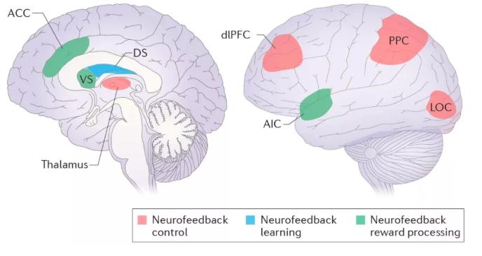 脑神经反馈训练真的不科学吗?不!