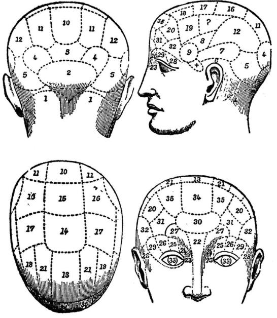 犯罪行为与大脑结构真的有关系?