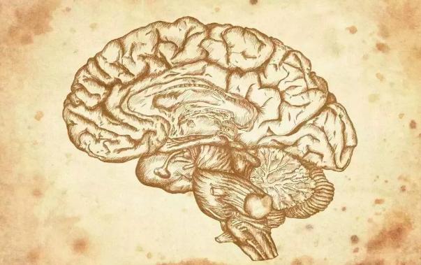 脑结构、脑工作原理最详细的图解
